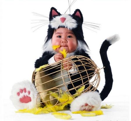 bebe-gato